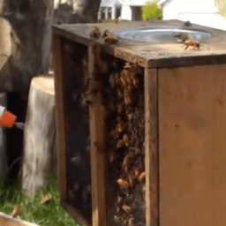 How to install package bees