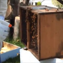 Spraying down package bees