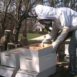 Placing a feeder box in a new bee hive