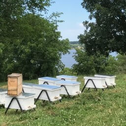 Painting Hives to protect them from the elements